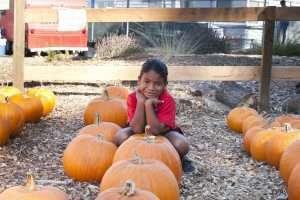 Loma Vista Farm Fall Festival