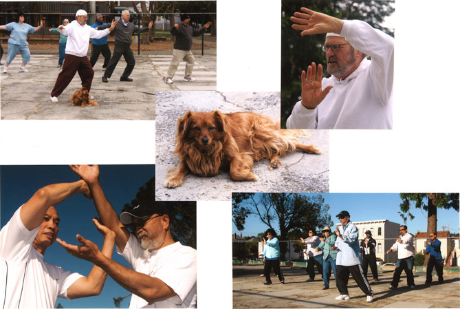 Tai Chi at City Park