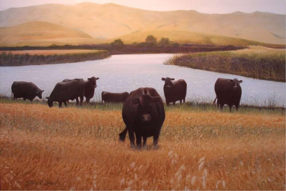 Steve L Davis Oil Paintings
