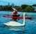 kayak and swan