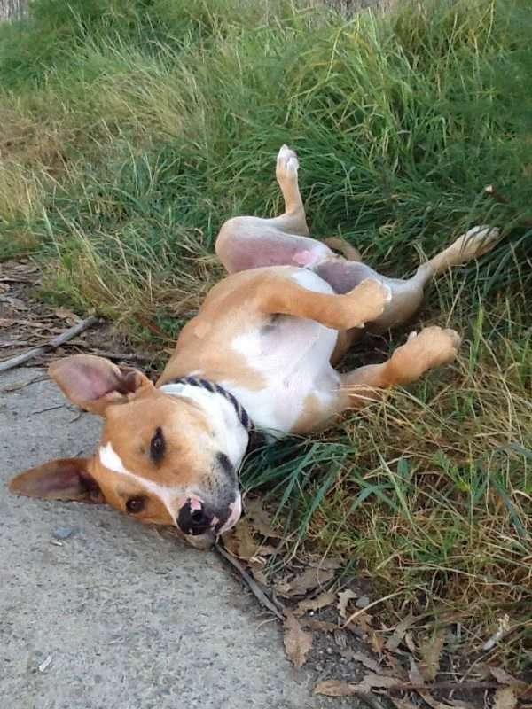 Myrna's Dog at Mare Island Heritage Preserve